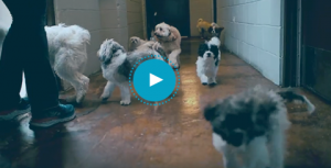 Welcome to Pet Care Plus video